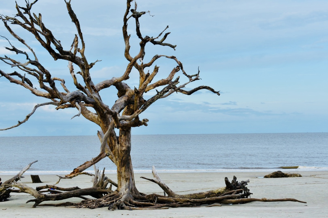 Driftwood Beach (KP, 2018)